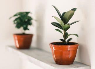 5 plantes qui n'ont pas besoin de lumière