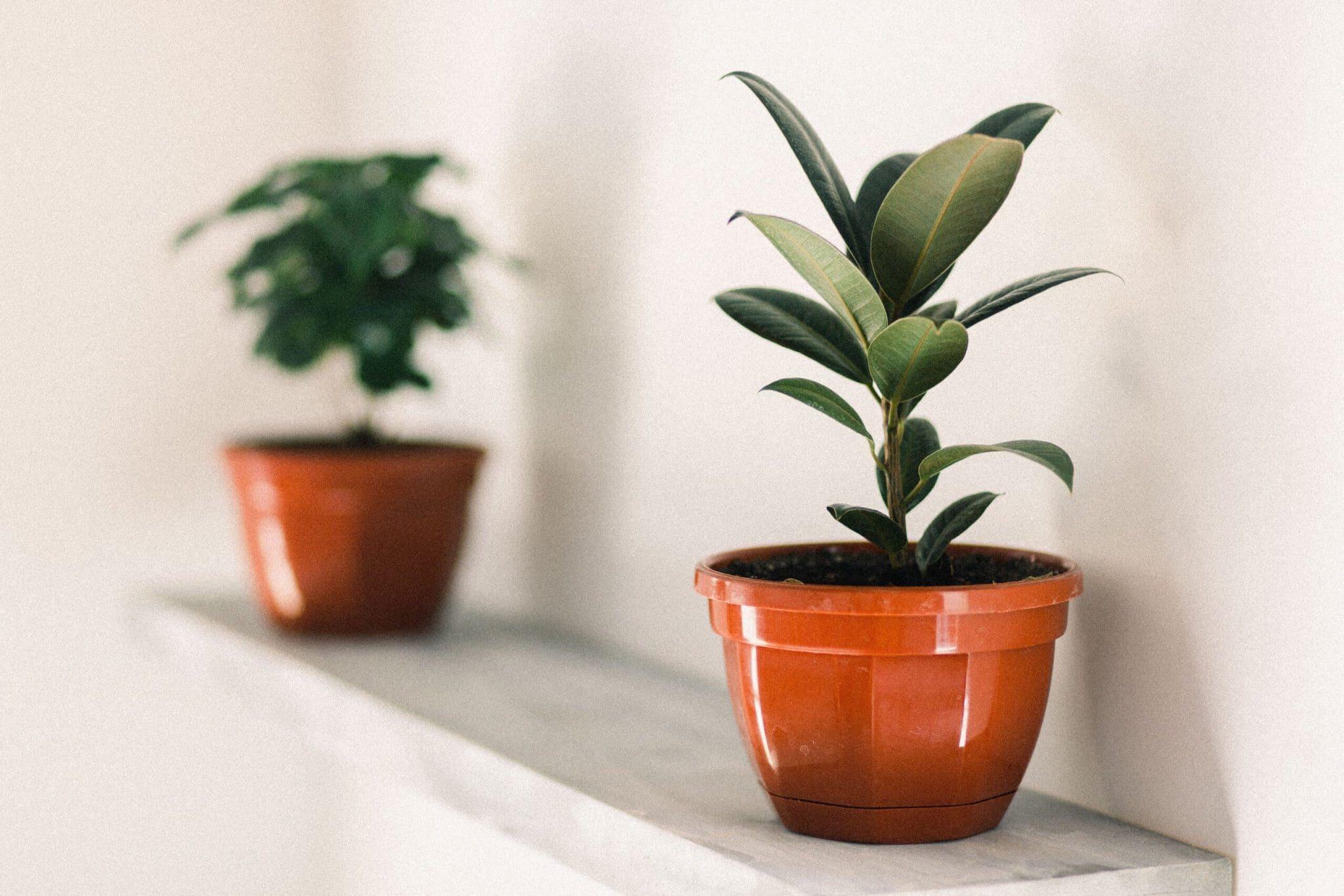 100 Incroyable Suggestions Plantes Qui N Ont Pas Besoin De Lumière