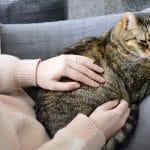 Adopter un chat dans un appartement: bonne ou mauvaise idée?