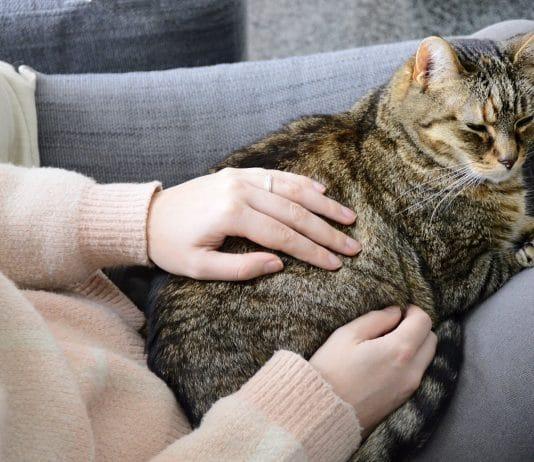 Adopter un chat dans un appartement : bonne ou mauvaise idée ?